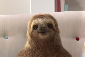 sloth01
