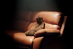 sloth02